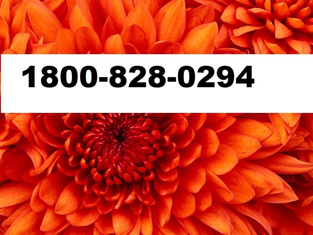 18008280294 Live Support Online NORTON Renewal Installation