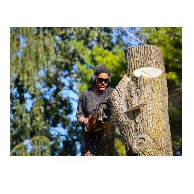 Culpeper Tree Service Experts