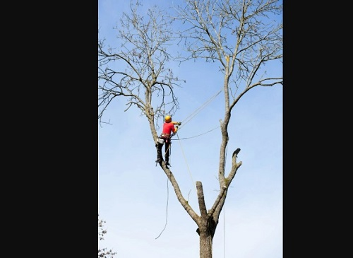Gainesville Tree Experts