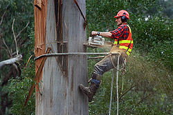 The Peoria Tree Service Pros