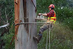 The Montgomery Tree Service Pros