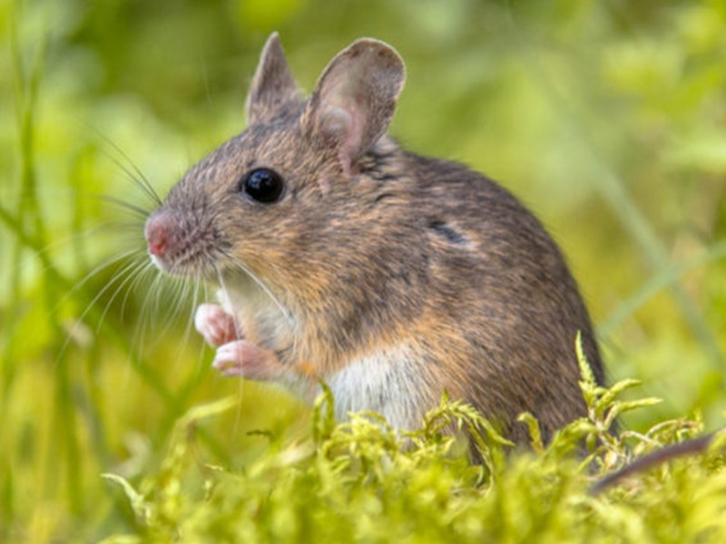 Wildlife Removal Services Near Me Canton GA | HomeFree Wildlife & Pest Solutions