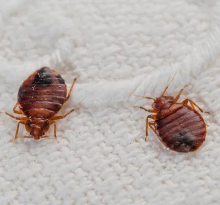 Pest Control Wyndham Vale