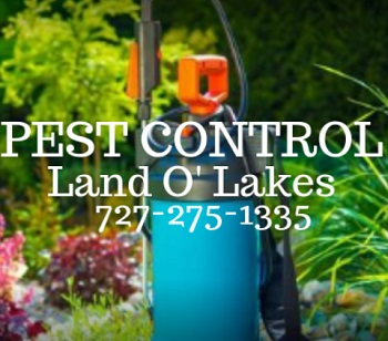 Pest Control Land O Lakes