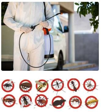 Pest Control Doctors Kraaifontein