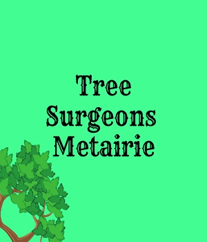 Tree Surgeons of Metairie