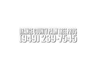 Orange County Palm Tree Pros