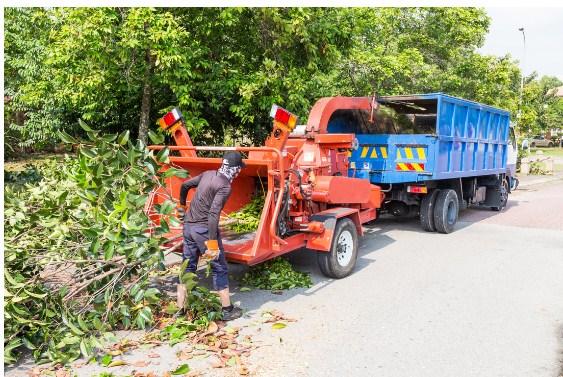 Tree Service Concord NH