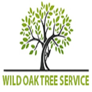 Round Rock Tree Experts