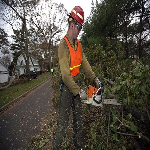 Stockton Tree Services