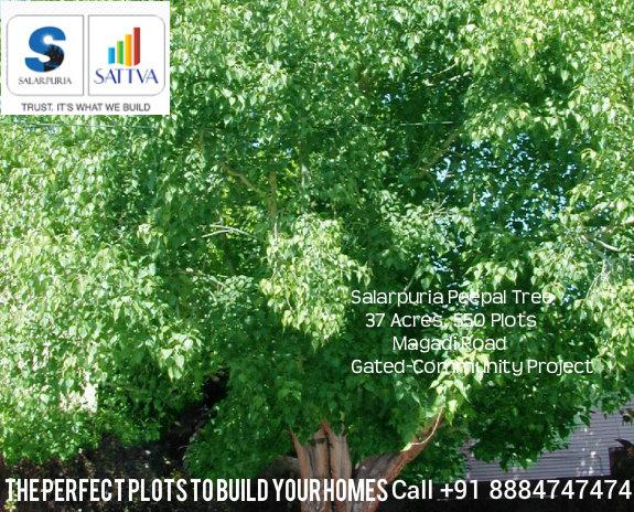 Salarpuria Sattva Pipal Tree Magadi Rd Bengaluru