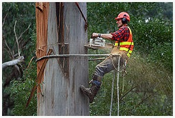 The Jackson Tree Service Pros
