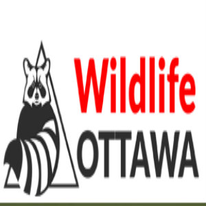Wildlife Ottawa